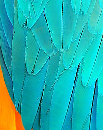 Parrot feathers background.jpg