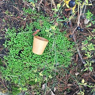 Edible biodegradable food packaging