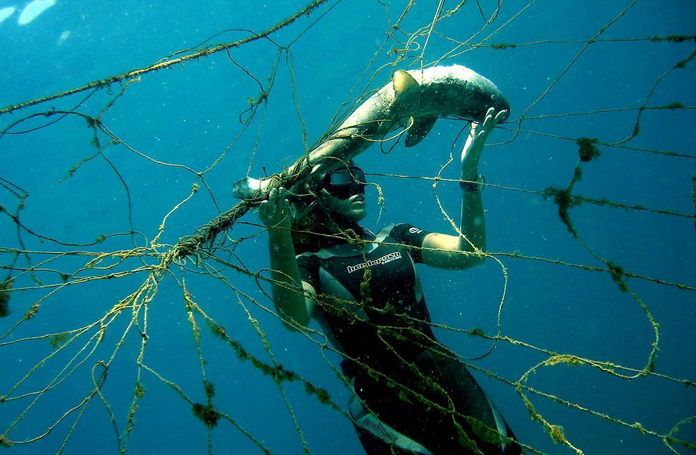 Sacha Dench with a juvenile shark