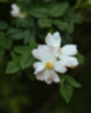 Wildrose-Webaufloesung-307.jpg
