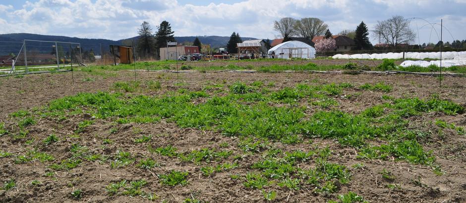 Herb Garden - Part 1, Spring 2021