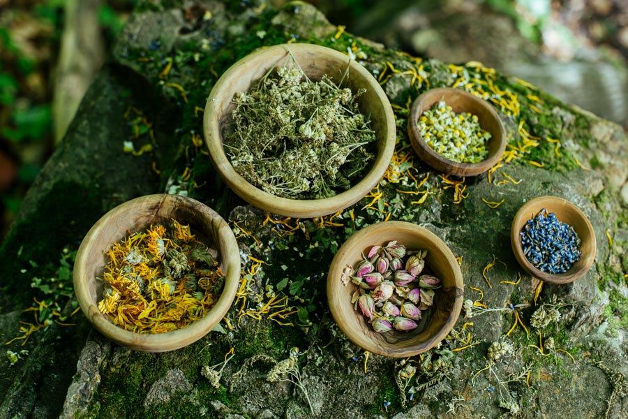 Kräuterschüsseln im Wald