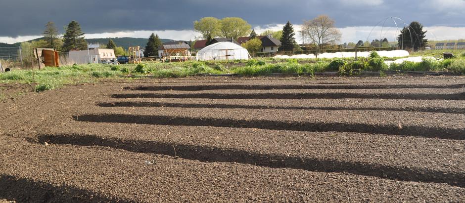 Herb Garden - Part 2, Spring 2021