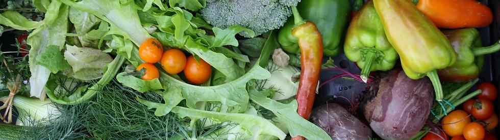 Distelfink Gemüse
