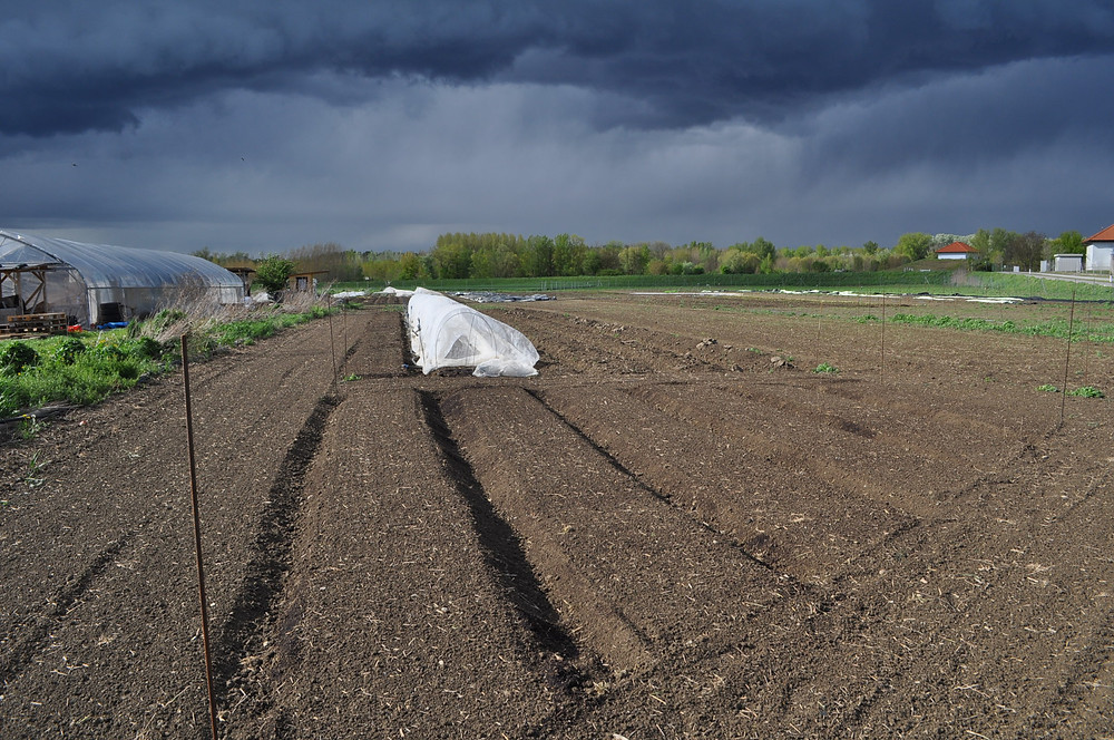 """Herb Garden """"Before"""" (with the soon to be vegetable field and the floodplain forest of the River Danube in the background)"""