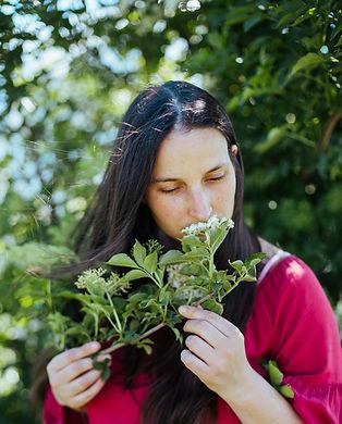 Holunderblüten riechen am Distelfink
