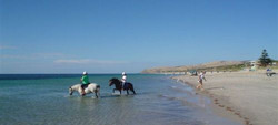 Popular Beach & Trail Riding