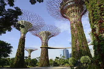 SB0962_Supertrees_Gardens_by_the_Bayjpg.