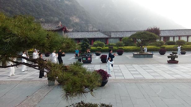 Pratique de l'arbre, Wudangshan, Chine