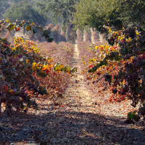 Four Days in Paso Robles Wine Country
