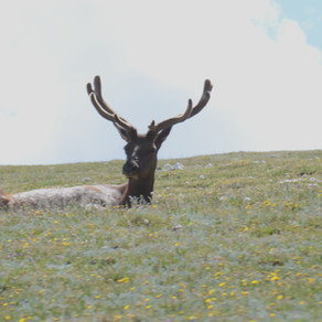 Colorado - Denver & Rocky Mountain National Park - 2018