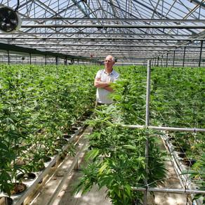 Cannabis Farm Tour in Carpinteria - 2019