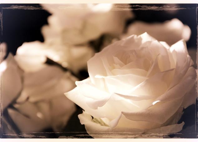 roses-108132_1920_edited.jpg
