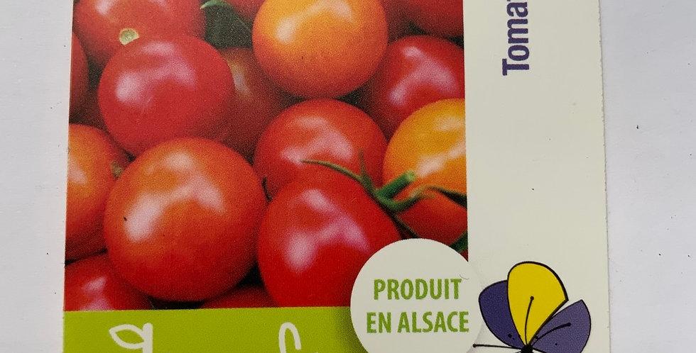 Tomate cerise Pot de 10 cm