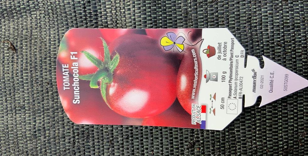Tomate sun chocolat pot de 10cm