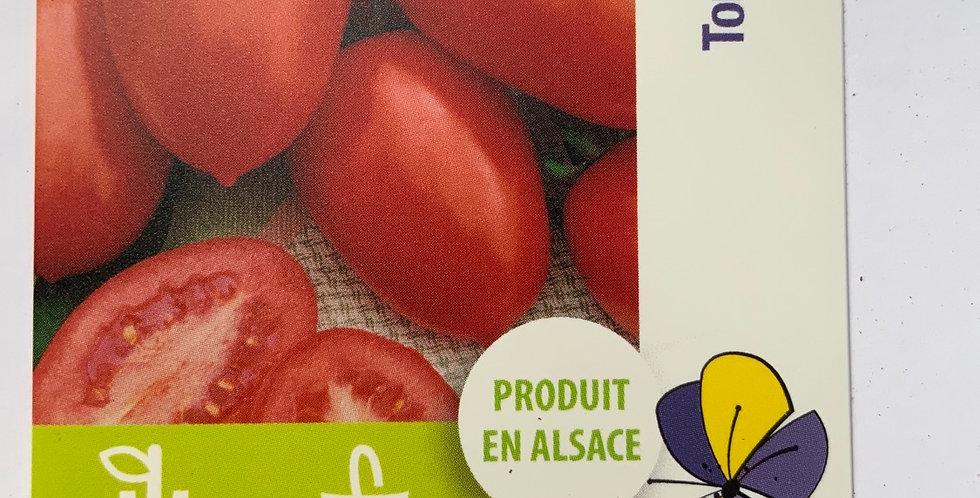 Tomate allongée roma pot de 10 cm