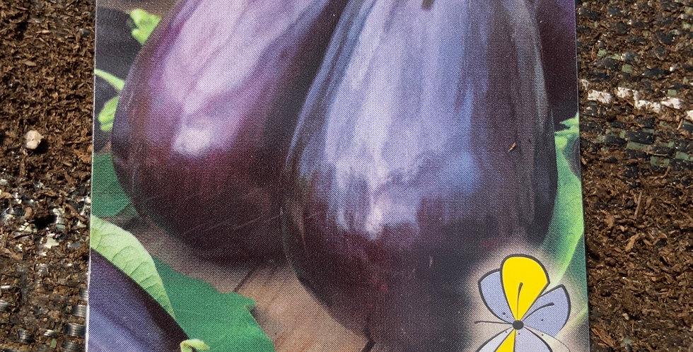 Aubergine violette pot de 10cm