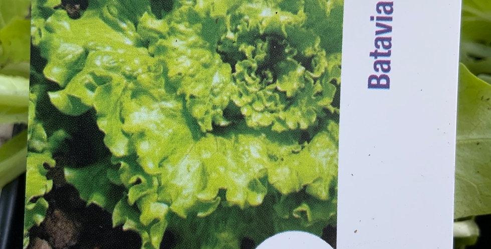 Salade batavia verte Barquette de 6