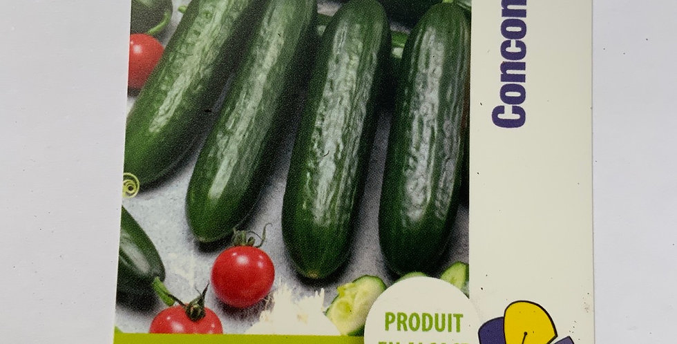 Concombre pot de 10 cm