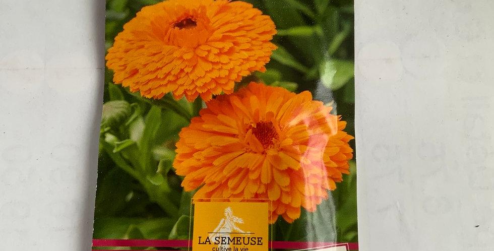 Soucis à grandes fleurs doubles oranges