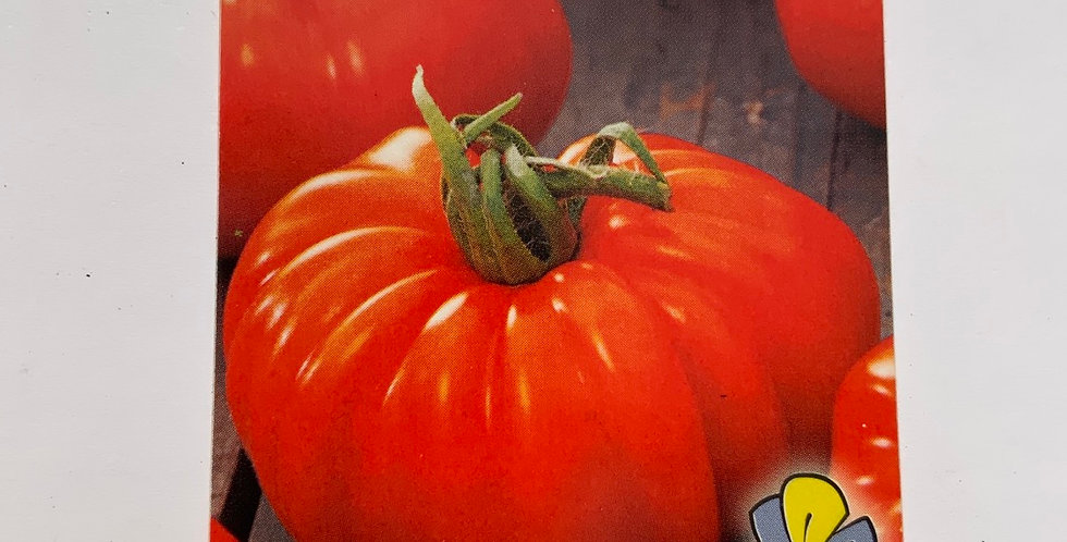 Tomate marmande Pot de 10 cm