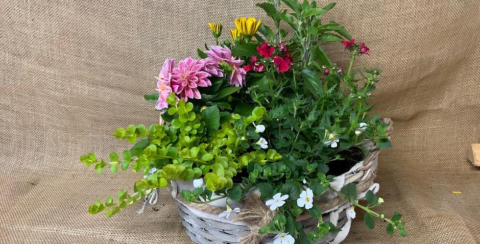 E COUPE ECLYSEE BOIS 6 PLANTES PASTILLE BLANCHE
