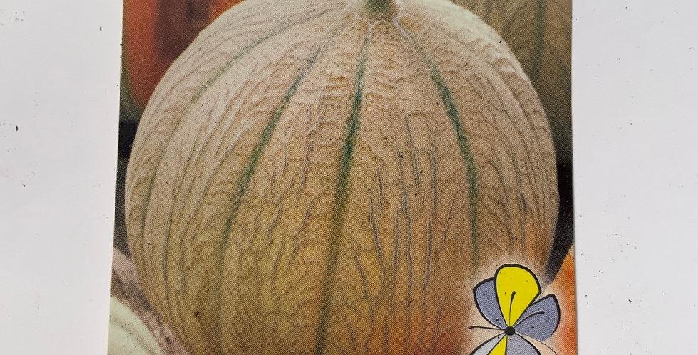 Melon pot de 10 cm