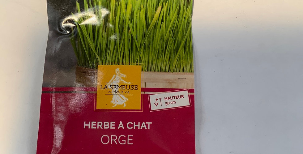 Herbe à chat orge