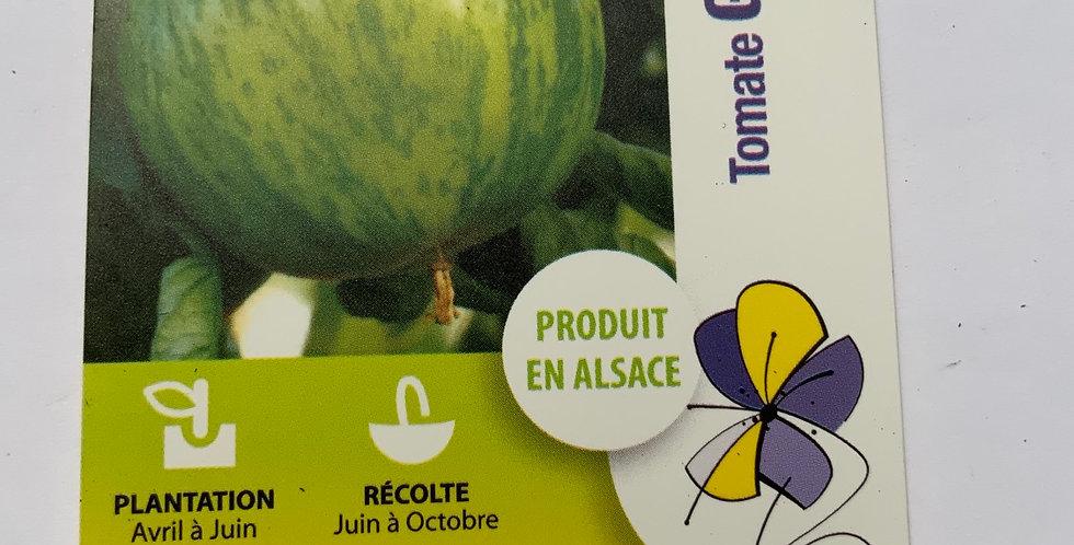 Tomate Green zébra pot de 10 cm