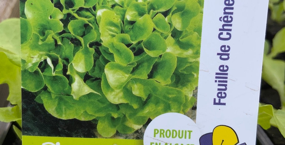Salade  feuille de chêne blonde barquette de 6