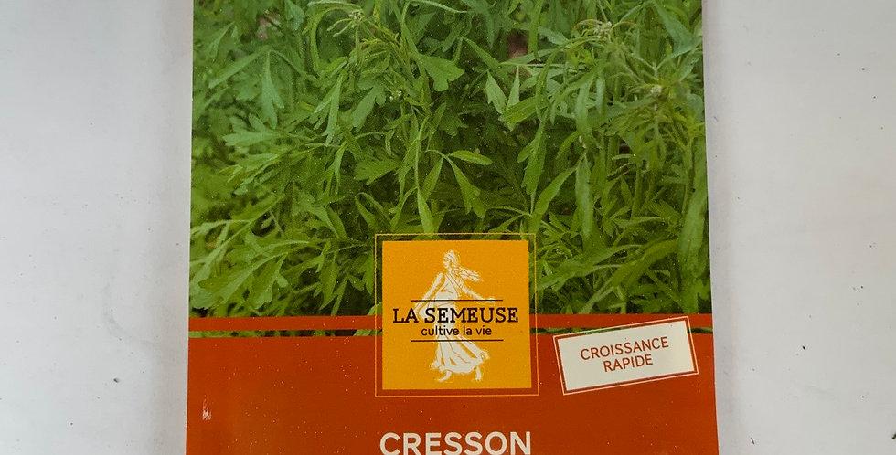 Cresson alenois commun