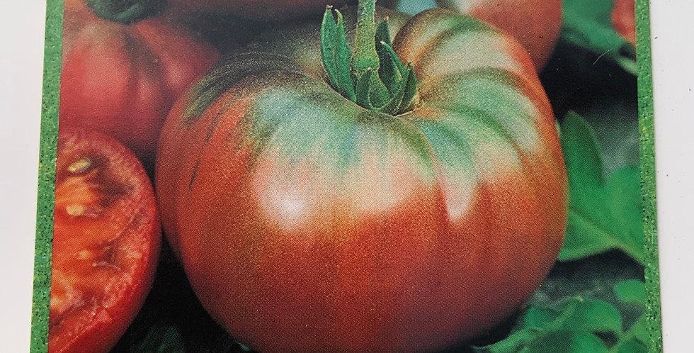 Tomate noire de Crimée pot de 10 cm