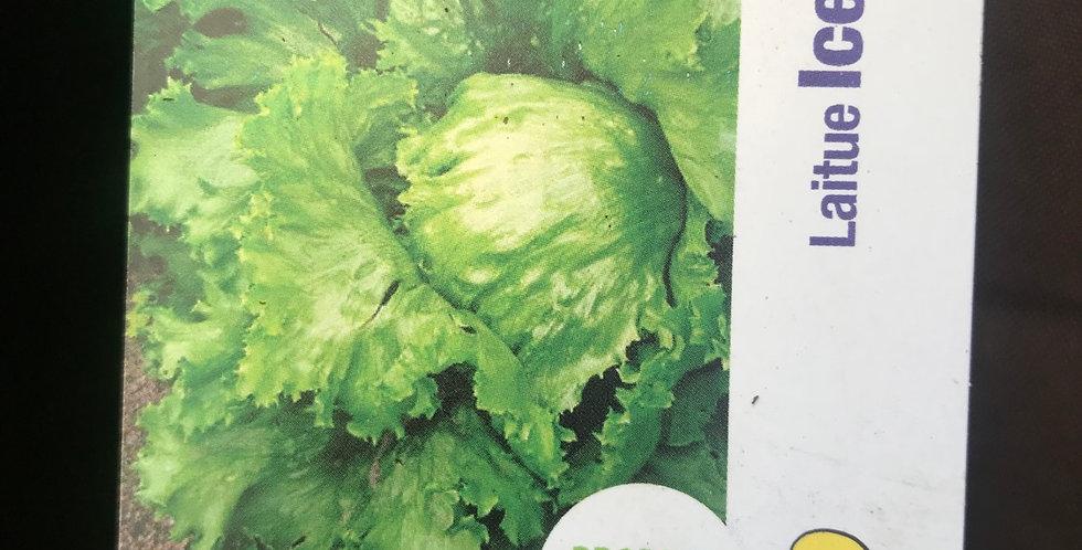 Salade iceberg barquette de 6