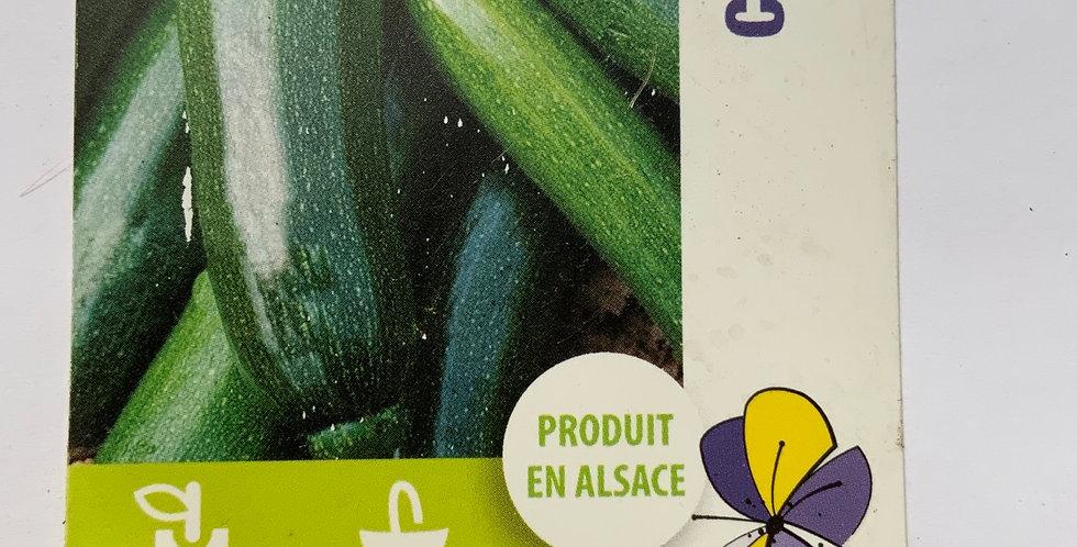 Courgette verte longue pot de 10 cm
