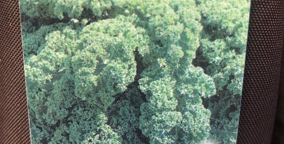 Chou kale barquette de 6