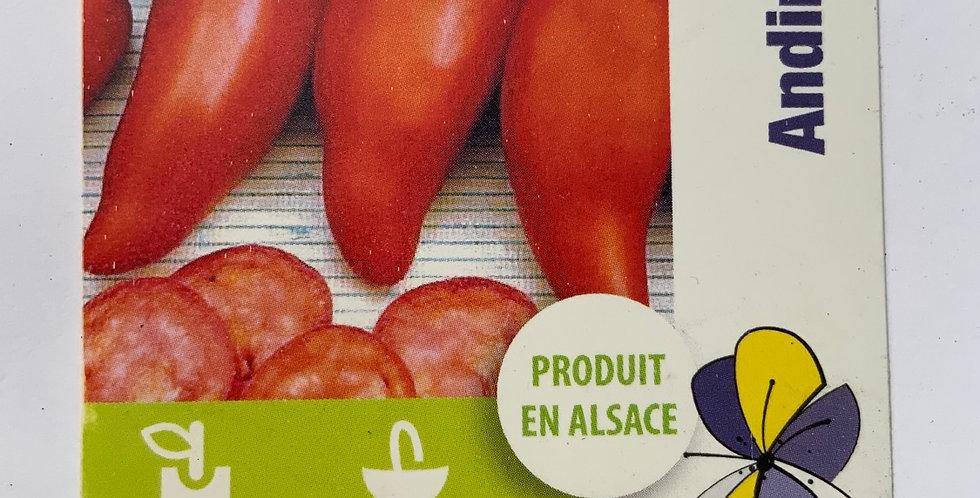 Tomate andine cornue pot de 10 cm