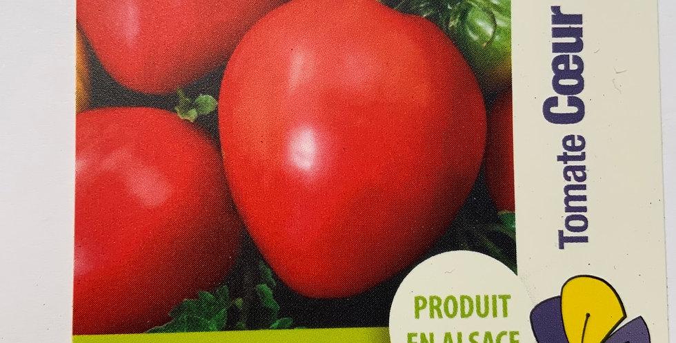 Tomate cœur de bœuf (as de coeur) pot de 10cm