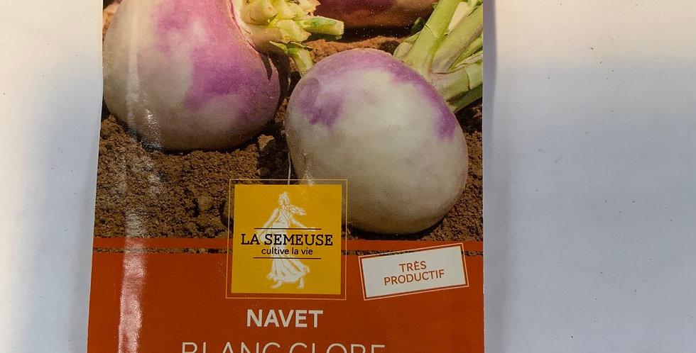Navet blanc globe à collet violet