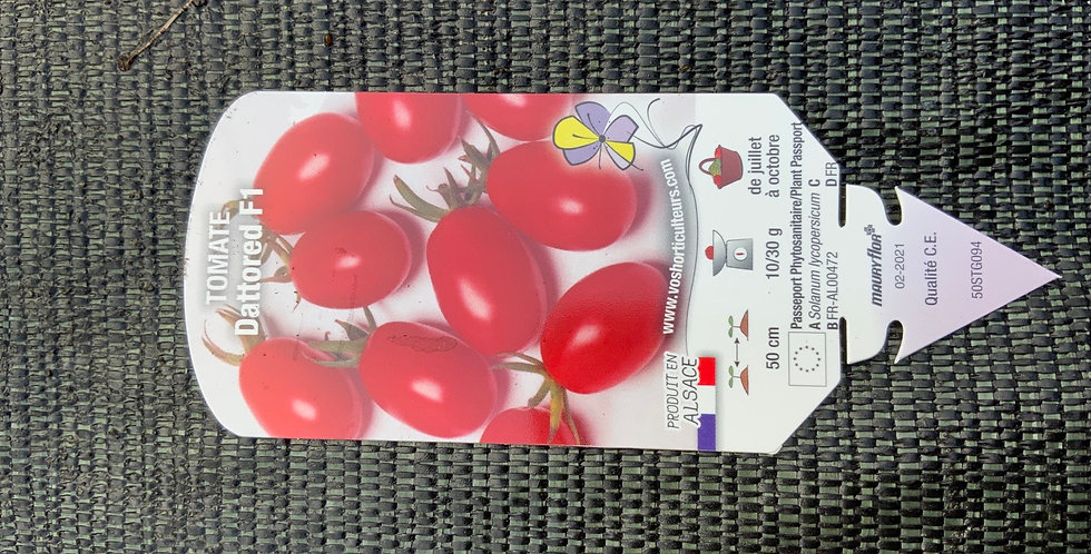 Tomate dattored pot de 10 cm