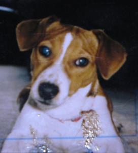 Nelly's photo