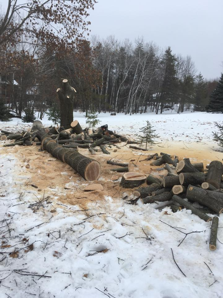 Sobieski Wisconsin Tree Removal Project