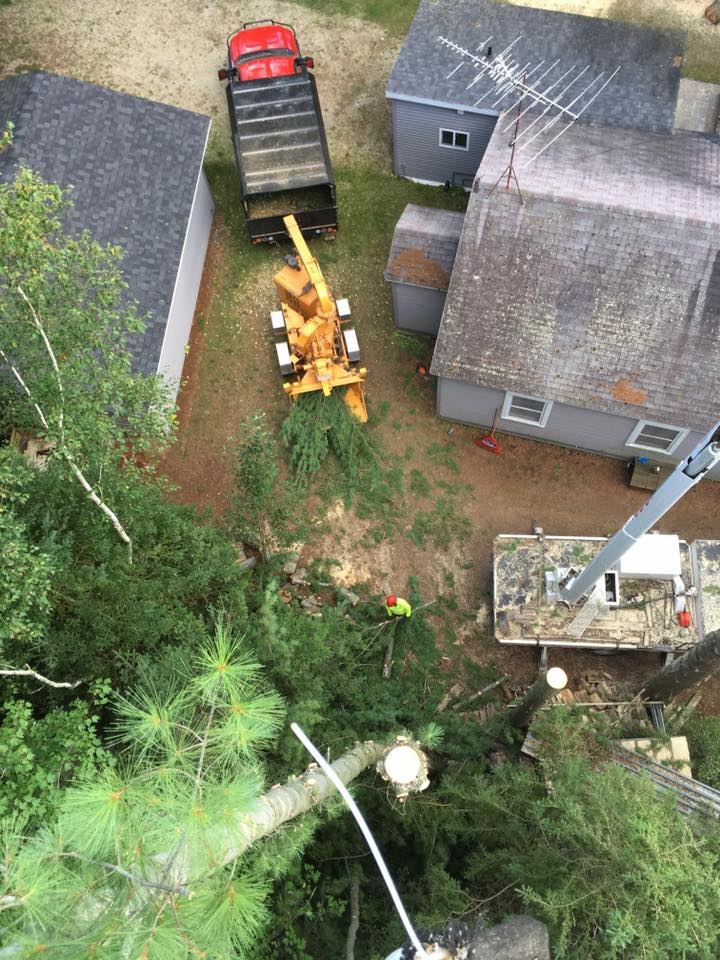 Tree services and lot clearing