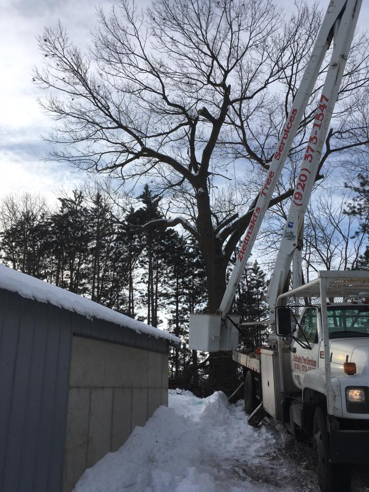 Zielinski tree services on location in crivitz