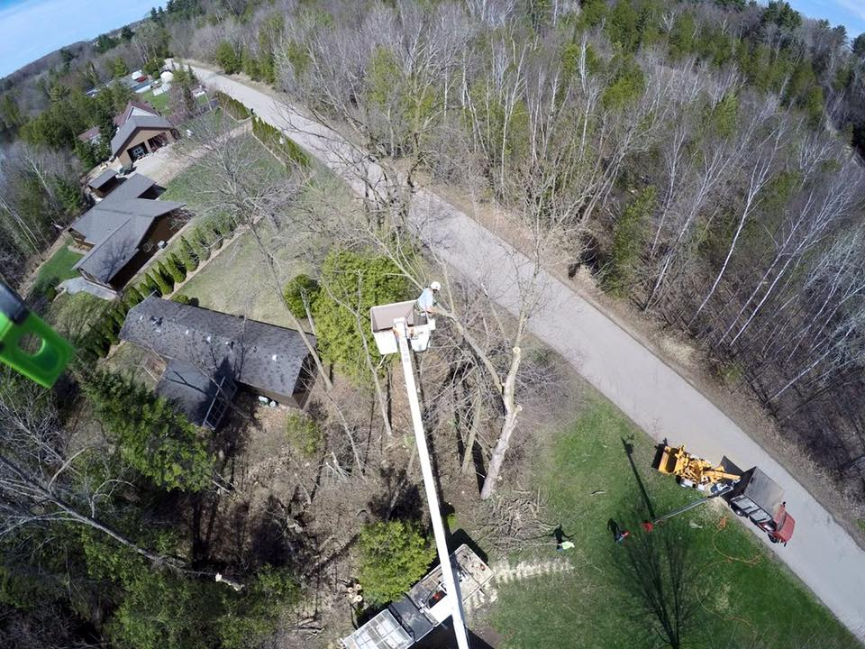 Tree service by the top tree removal company in marinette county