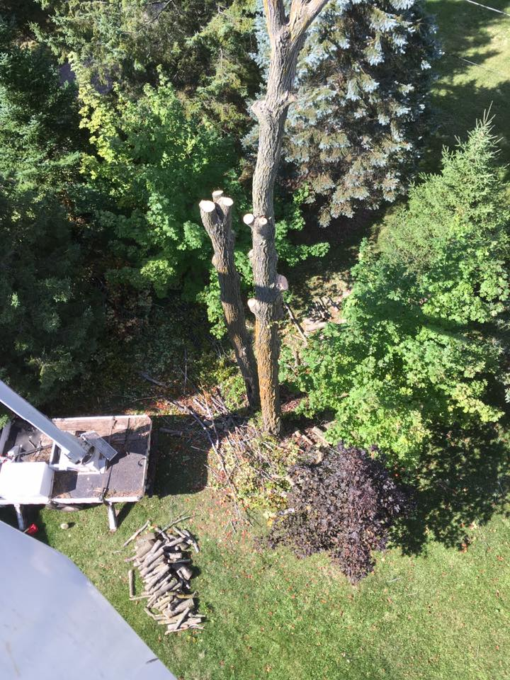 Tree Service project in Gillett Wisconsin