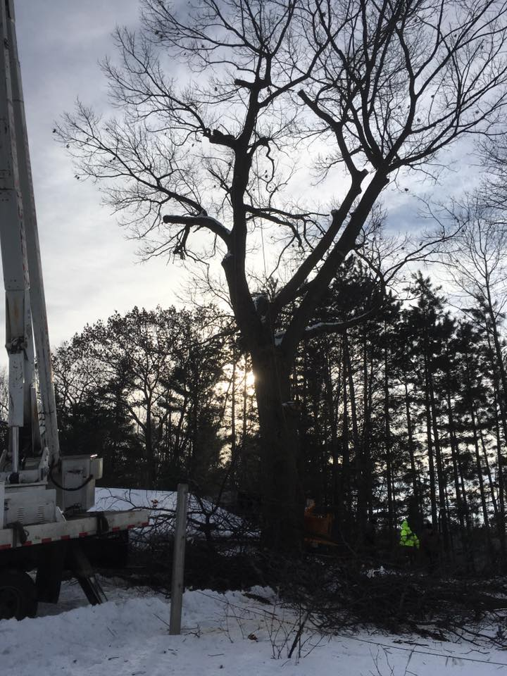 Tree service in Crivitz Wisconsin 54114