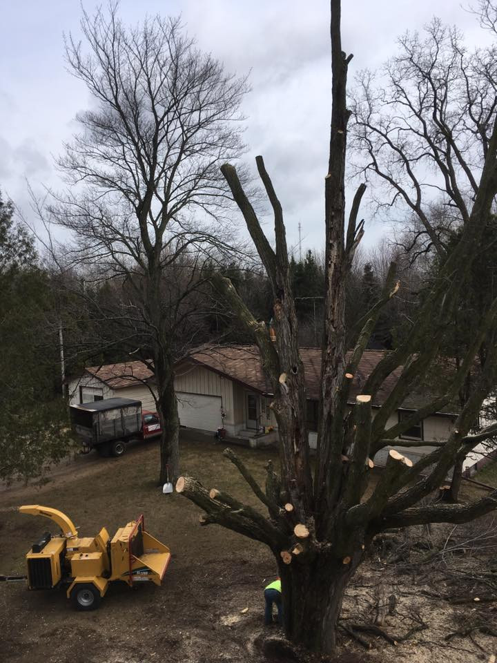 tree trimmed in oconto falls