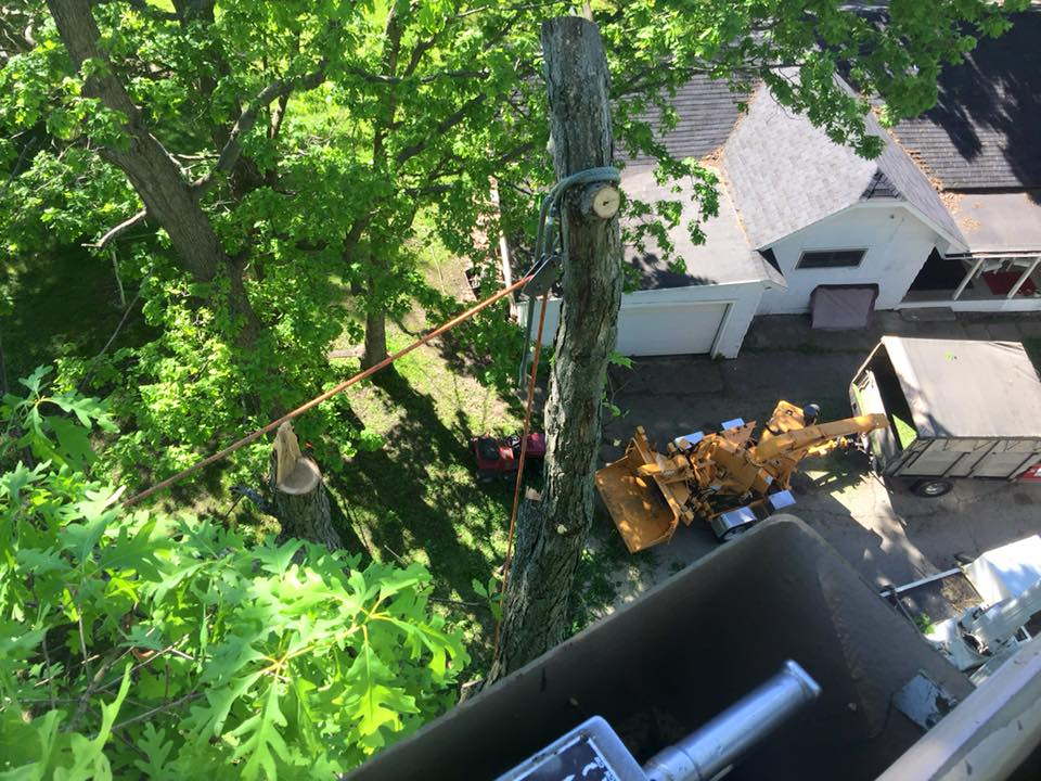 zielinski tree services on location in oconto falls 3