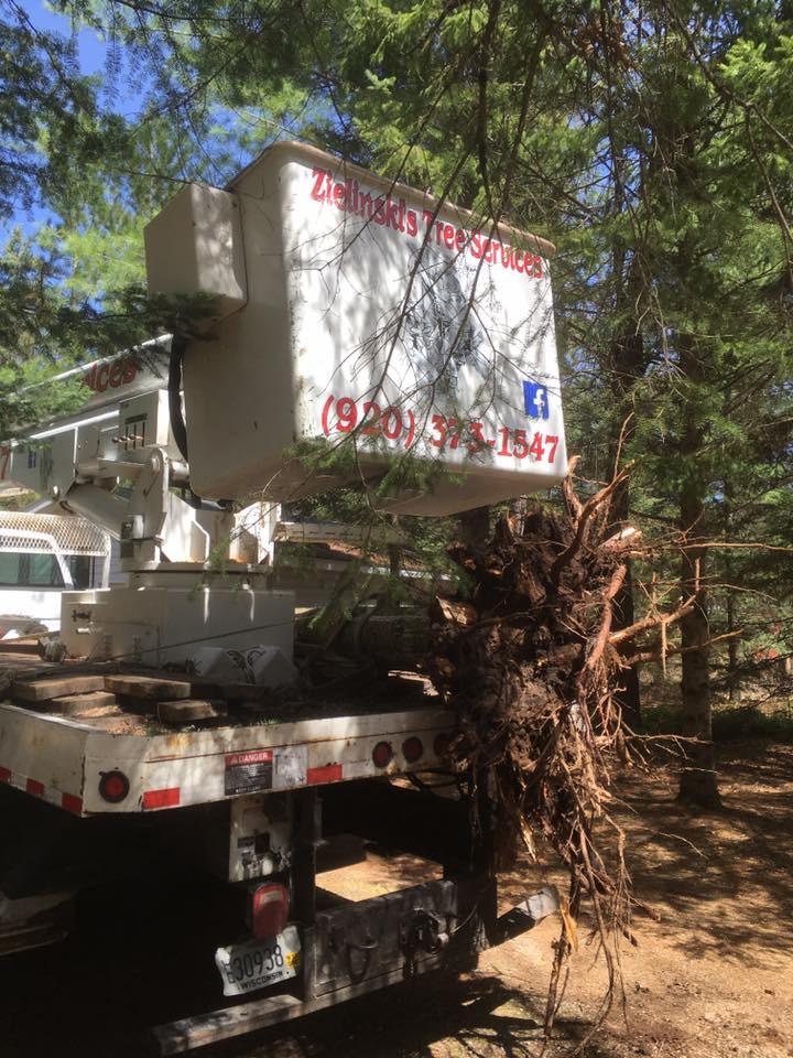 total tree service in crivitz
