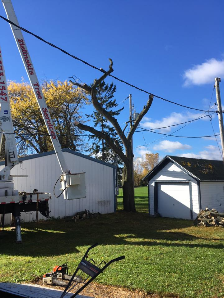 Oconto wisconsin tree service project